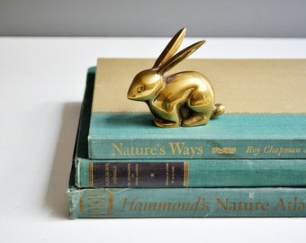 Vintage Nature and Atlas Book Collection - Books Plates