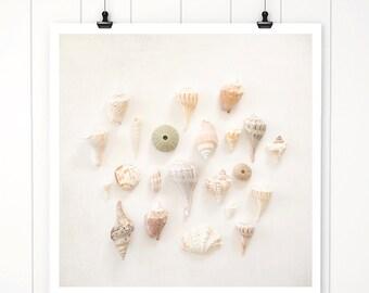 beach decor, sea shells, neutral sea shell print, beach decor coastal, fine art, seashells, beach cottage decor, beach house artwork