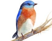 Bluebird Painting - B034 bird print of watercolor painting 5 by 7 print, bird art, wall art, home decor