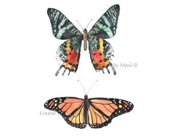 Butterflies print of watercolor painting BT3816, 5 by 7 size smallest print, insect wall art, orange and black wall art