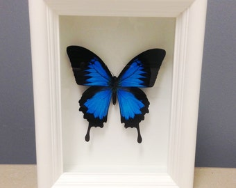 Real Framed Butterfly - Insects, Bugs, Bug Art, Insect Art, Framed Insect, Bohemian, Entomology, Beetle, Entomology