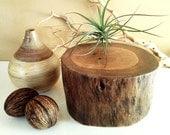 TREASURY ITEM - Wood Tree stump - Centerpiece - Home decor - Pedestal - Tree log - Cabin decor - Holiday decor