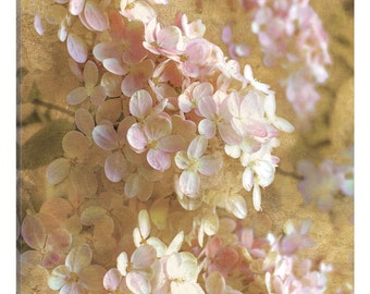 iCanvas Gilded Hydrangea I Gallery Wrapped Canvas Art Print by All That Glitters