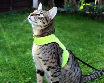 Mynwood Cat Walking Jacket Harness Vest High Visability