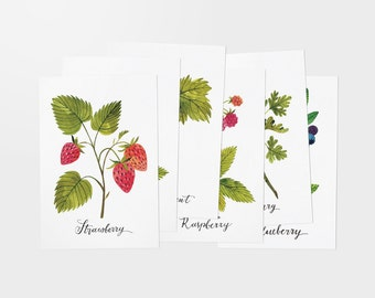BERRY postcards - set of 6