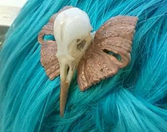 Genuine Starling Skull on Vintage Metal Bow Hair Clip