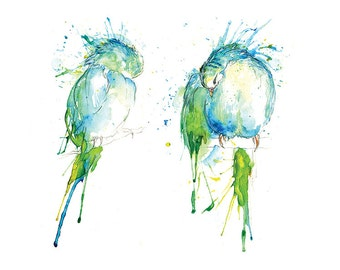 Giclee Fine Art Print: Blue Budgie Preen Watercolour Painting