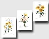 Set of 3 Prints (Yellow Room Decor, Yellow Flower Art, Yellow Nursery Decor, Yellow Wall Art) Redoute Botanical Prints
