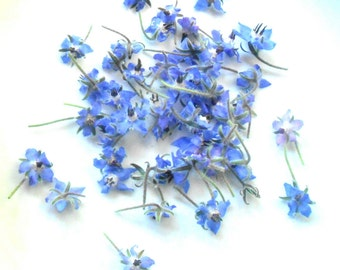 75 + Organic Real Candied BORAGE BLOSSOMS, Purple Blue, Edible Flowers, Bulk, Wedding Cakes, Cup Cake Toppings