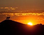 AMBER SUNSET, Dorset, Landscape photography, Wall Decor, Colmer's Hill, Bridport. Mid-summer sunset, Summer Solstice