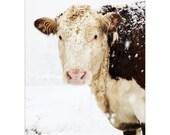 French Country Farm Cows Winter Art Farmhouse Decor Winter Snow Rustic Warm Sepia Brown White Simple Style Farm Country, Fine Art Print