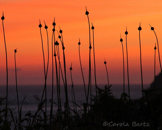 Pacific Sunset Photograph, Coastal Plants and Evening Sky, Nature Fine Art Photography, 8 x 10 Photo Print, Oregon Coast, Pacific Northwest