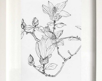 A Magnolia Branch