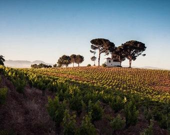 Spanish Vineyard Photograph, Landscape on the Camino de Santiago, Fine Art Photography, Photo Print