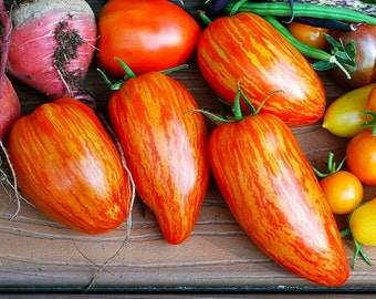 Striped Roman, heirloom tomato, 25 seeds, sweet flavor, great for sauce, showy Roma, artisan tomato, by Brad Gates