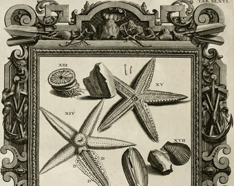 1735 Antique fantastic copper engraving of STARFISHES, SEA STARS. Molluscs. Natural History. 280 years old print