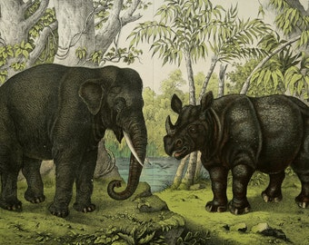 1886 Antique lithograph of BIG ANIMALS: Elephant and Rhinoceros. 130 years old gorgeous large size print.
