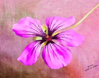 Floral art print, Geranium, flower art print, flower wall art, flower painting, flower photography, floral wall art, purple flower