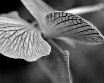 A Different Perspective of an Orchid (FREE SHIPPING in the U.S. only)