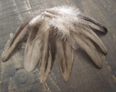 8 Grey and Black Rooster Feathers ~ Cruelty Free **Use Coupon Code FEATHERS20 and save 20% on all Feathers**