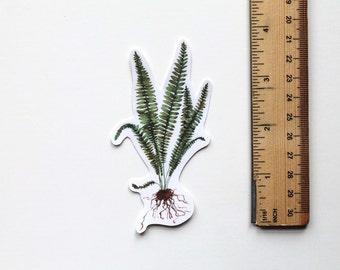 Fern Sticker, Fern, Fern art, Plant Sticker, Botany, Vinyl Sticker, Cool Stickers, Laptop Sticker, Phone Sticker, Leaf Sticker, vinyl