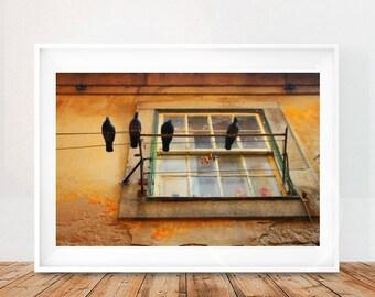 Pigeons Wall Art, Printable Wall Art, Digital Download, Portugal Wall Art Print, Portugal Home Decor, Birds Wall Art Print, Printable Birds