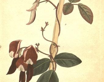 Flower art, Vintage print, Nature, Botanical art, Flower print, Wall decor, Nature art, 268