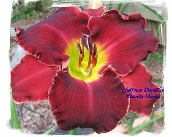Daylily,'Rhonda Mayes', double fan, perennial