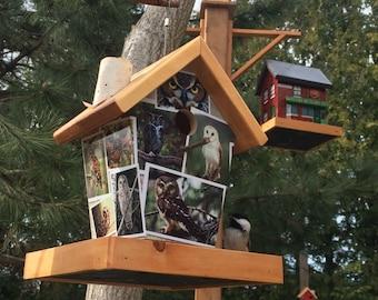 Owl Birdhouse Bird Feeder