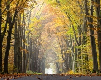 Randomings, Tree tunnel, autumn, old highway, road, mist, mountains, big blue sky, green, zen, fine art photograph picture office print