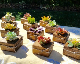 75 Succulent Wedding favors, succulent Bridal shower favors, succulent baby shower favors