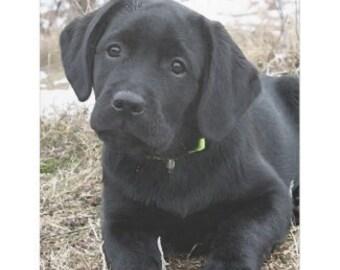 Black Labrador 6AS Throw Blanket - Black Lab Gifts - Labrador Gifts - Black Lab Blanket - Labrador Decor -Dog Lover Gift - Dog Blanket