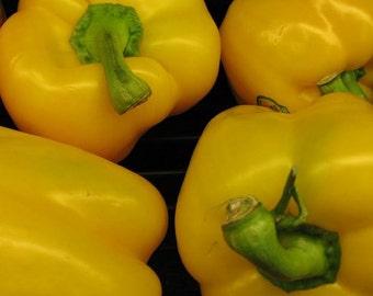 """Yellow Bell Pepper """"Sunbright""""  OP.  15+ seeds"""
