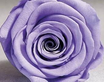 Preserved* Violet  Roses, Preserved  Roses, Roses for Bouquet, Prom Roses, Preserved Rose Bouquet  Simply Beautiful !