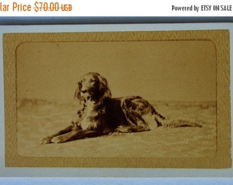 ON SALE Antique French Dog CDV Photograph