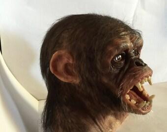 Scinpanzè