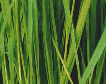 Grass PDF Cross Stitch Pattern