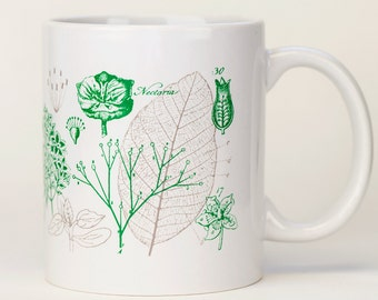 Botany Mug   Plants Flowers, Ceramic Science Coffee Mug, Gardener Gift, Botanical, Biology, Earth Day, Scientific Illustration, teacher gift