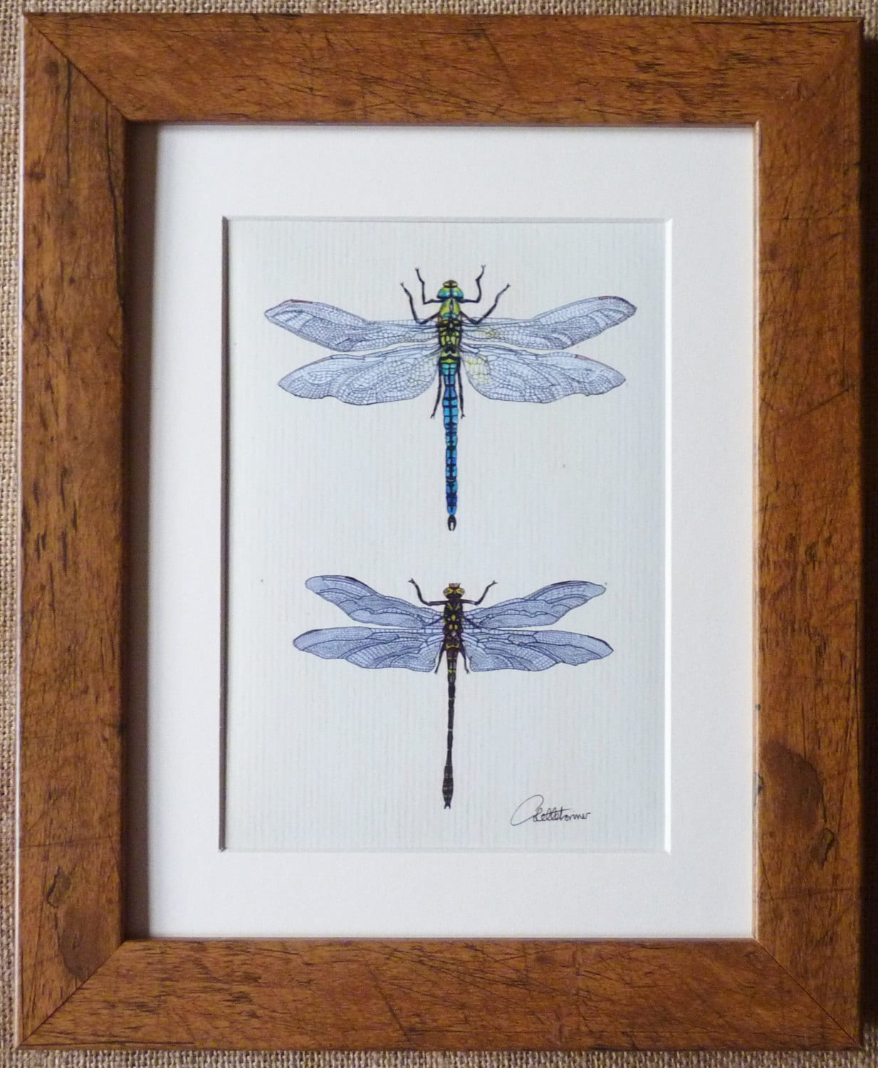 Dragonfly picture dragonfly print dragonfly wall art for Dragonfly wall art