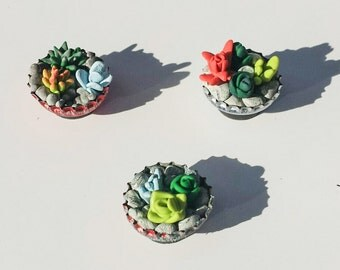 Mini cactus/succulent/cacti bottle cap magnets