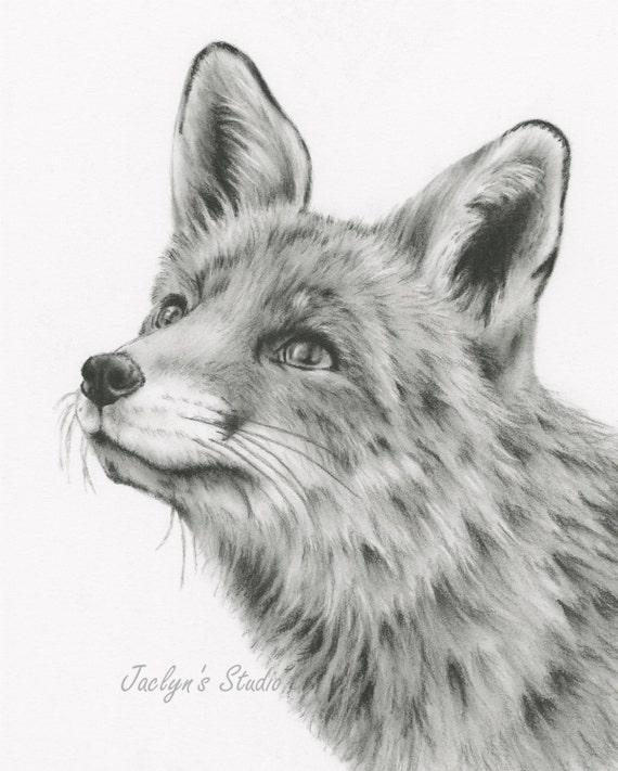 art de fox croquis au fusain dessin au fusain gicl e print 8. Black Bedroom Furniture Sets. Home Design Ideas