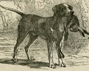 Retriever Antique Hunting Dog Print - Hunting Retriever Wall Art, C.1885 - Antique Engraving - Hunting Christmas Gift - Matted 8x10""