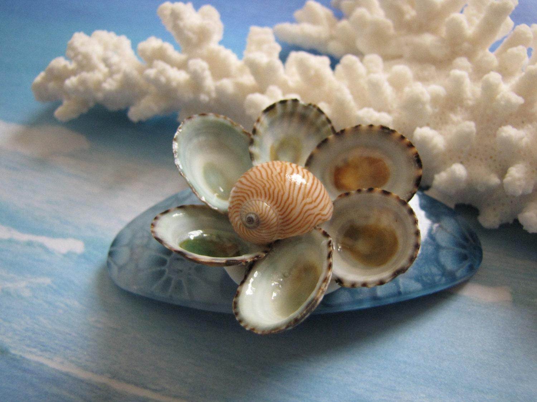 Seashell hair clip shell flower hair barrette 3 5 hair for Seashells for hair