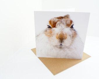 MOUNTAIN HARE Blank Greetings Card