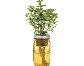 Mason Jar Herb Kit Self Watering Planter For Growing Basil