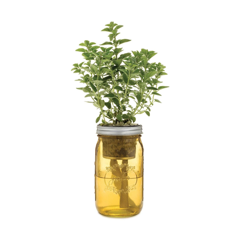 Herb Garden Kit Self Watering Planter For Greek Oregano
