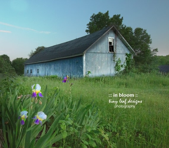 Shaw Farm Spring Iris Original Photography