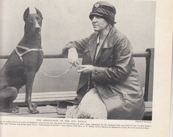 "1937  Dog Print,""Aristocrats Of The Dog World"" Doberman  Approx 8"" X 10.5"""