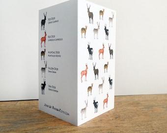Herd of Deer Card