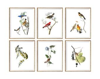 Birds Art Print SET of 6. bird poster set, large bird poster, bird gallery wall, bird prints set, vintage bird prints, antique bird prints